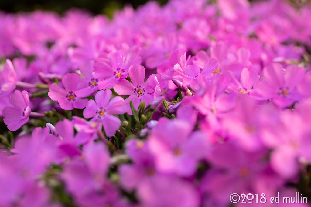 Backyard Blooms 2018